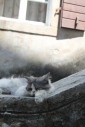 Luie kat op de leuningen van een trap.