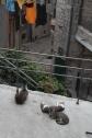 Had ik al gezegd dat Kotor een groot luie-katten probleem heeft?